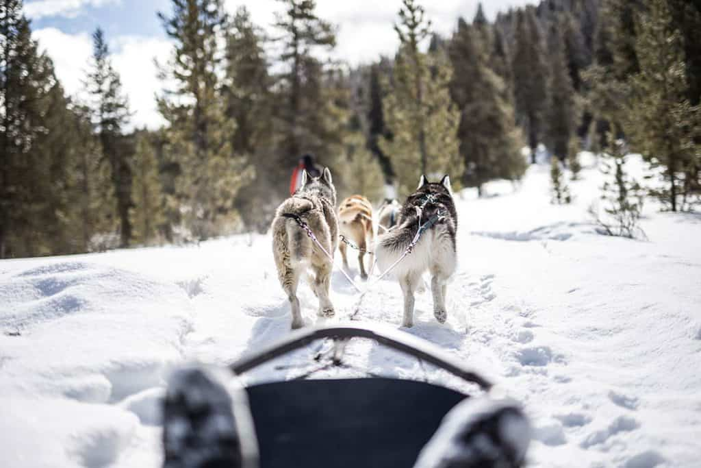 yellowstone dogsledding at lone mountain ranch in big sky montana - ami sayer real estate